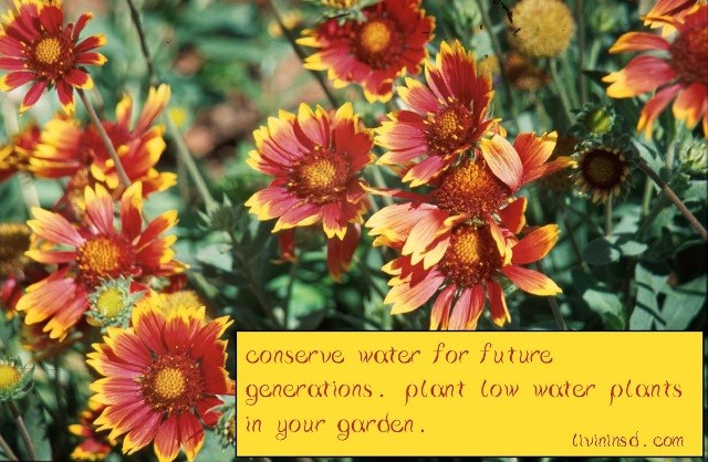 155 Conserve water, plant low-water plants in your garden
