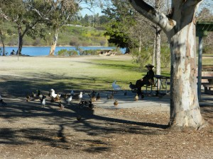 Feeding the Ducks at Lake Murray